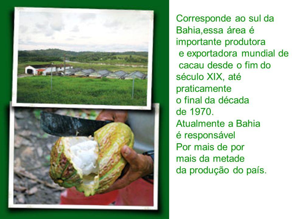 Corresponde ao sul da Bahia,essa área é. importante produtora. e exportadora mundial de. cacau desde o fim do.