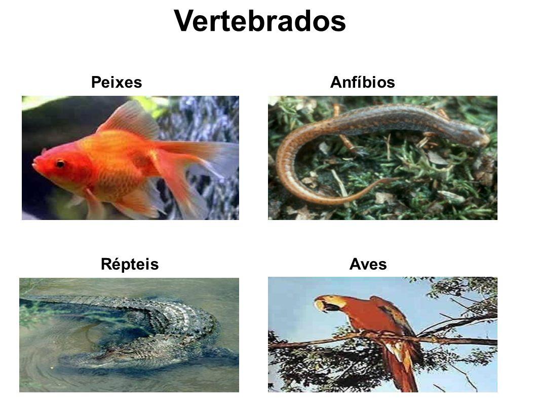 Vertebrados Peixes Anfíbios Répteis Aves