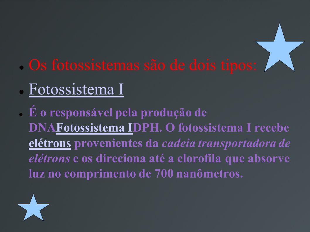 Os fotossistemas são de dois tipos: Fotossistema I