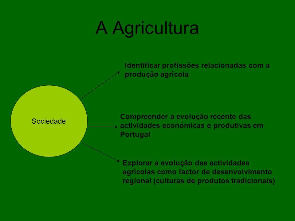 A Agricultura Identificar profissões relacionadas com a produção agrícola. Sociedade.