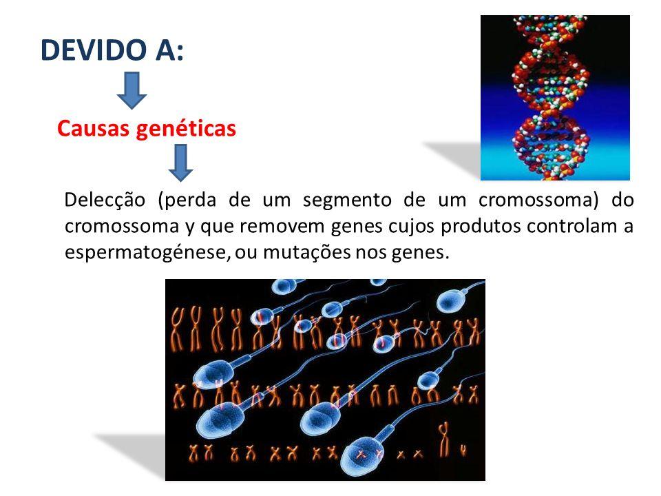 DEVIDO A: Causas genéticas