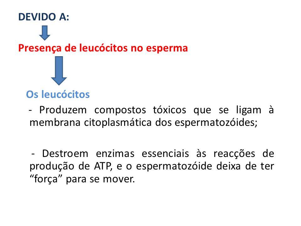 DEVIDO A: Presença de leucócitos no esperma. Os leucócitos.