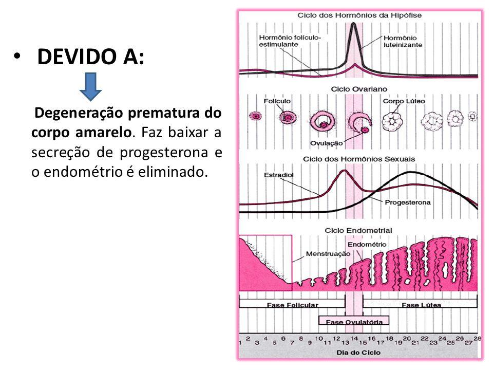DEVIDO A: Degeneração prematura do corpo amarelo.