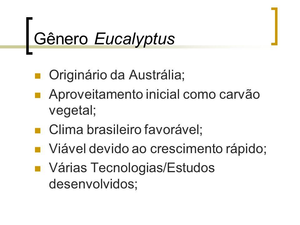 Gênero Eucalyptus Originário da Austrália;