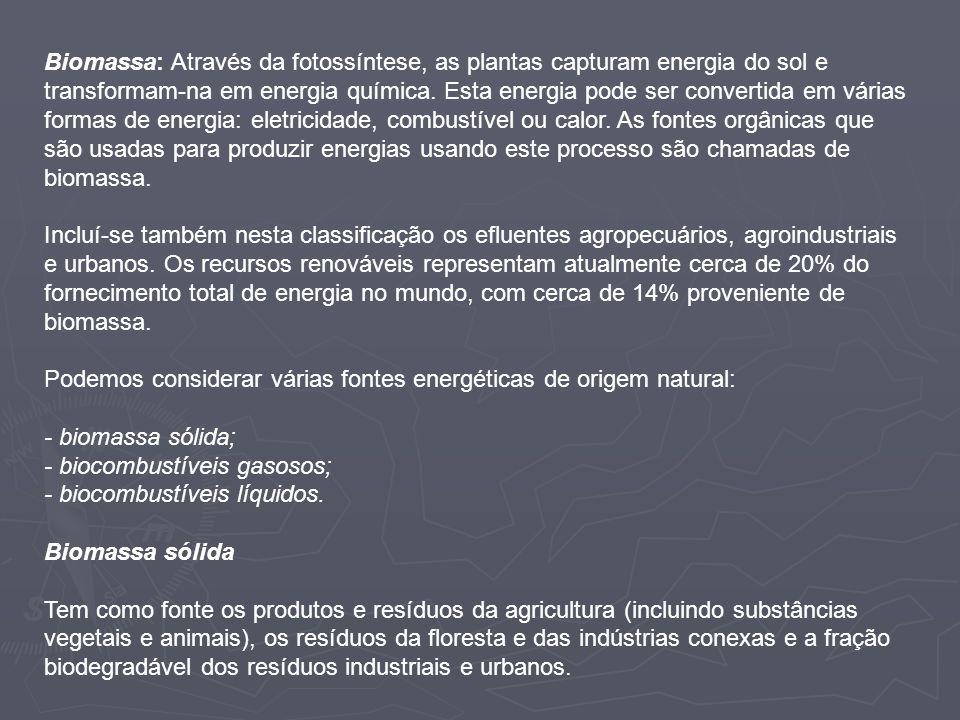 Biomassa: Através da fotossíntese, as plantas capturam energia do sol e transformam-na em energia química.