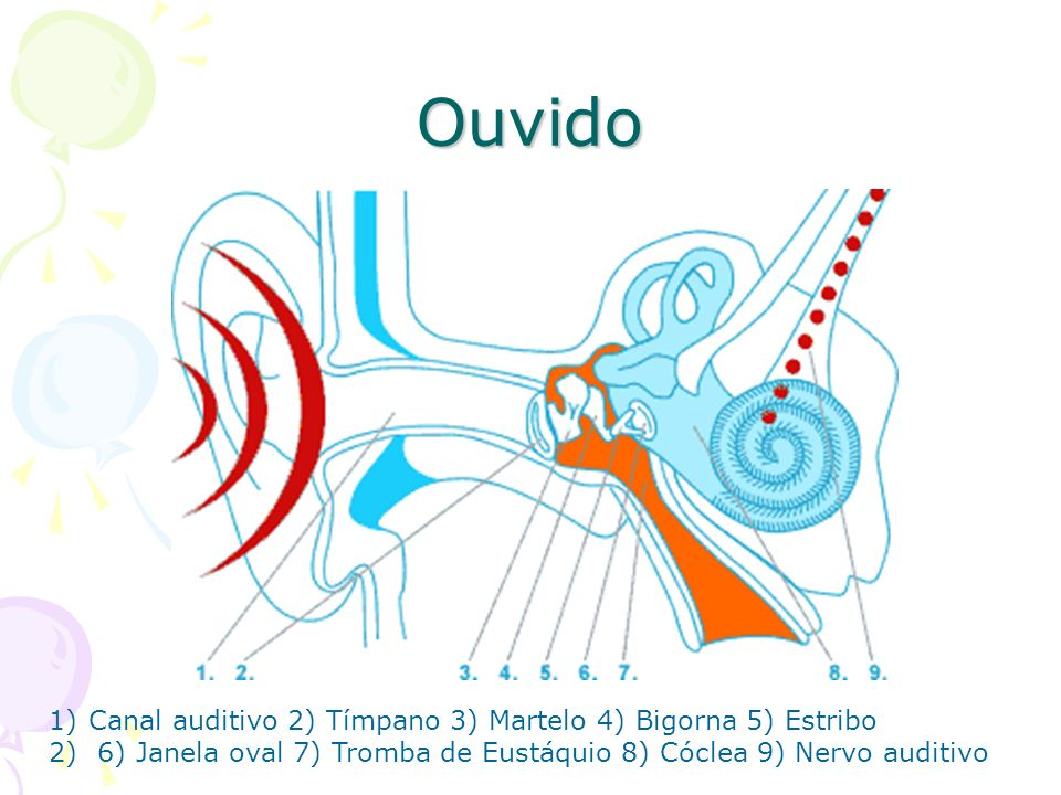 Ouvido Canal auditivo 2) Tímpano 3) Martelo 4) Bigorna 5) Estribo