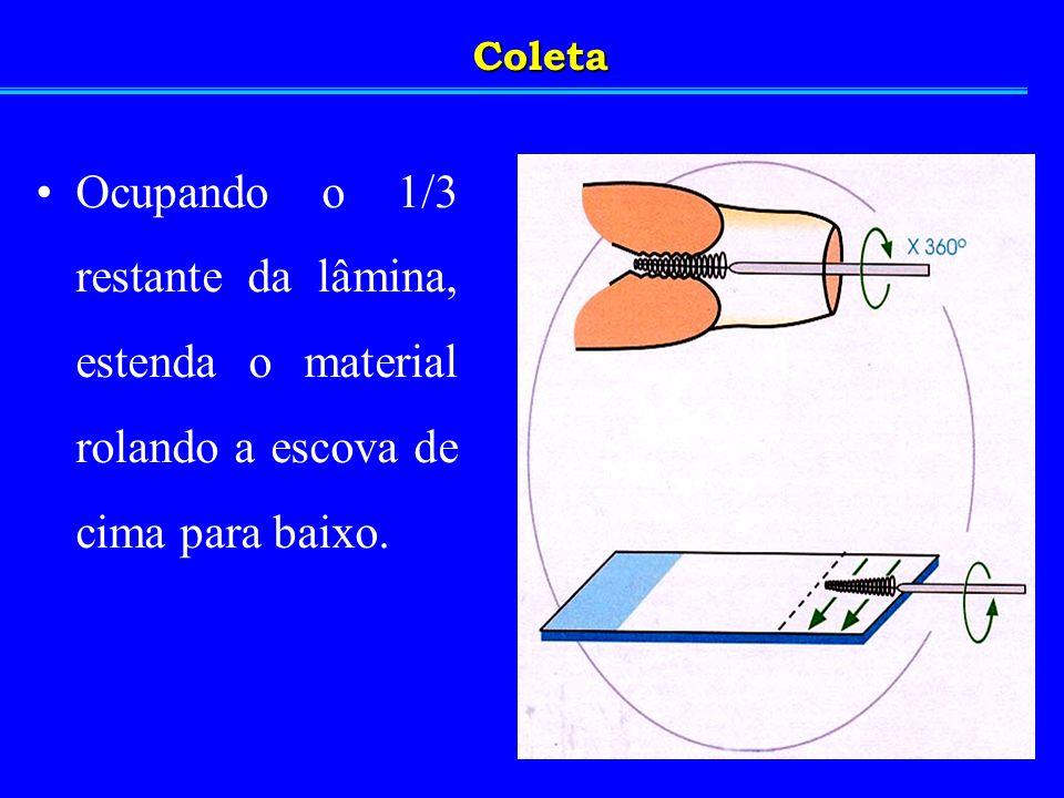 Coleta Ocupando o 1/3 restante da lâmina, estenda o material rolando a escova de cima para baixo.