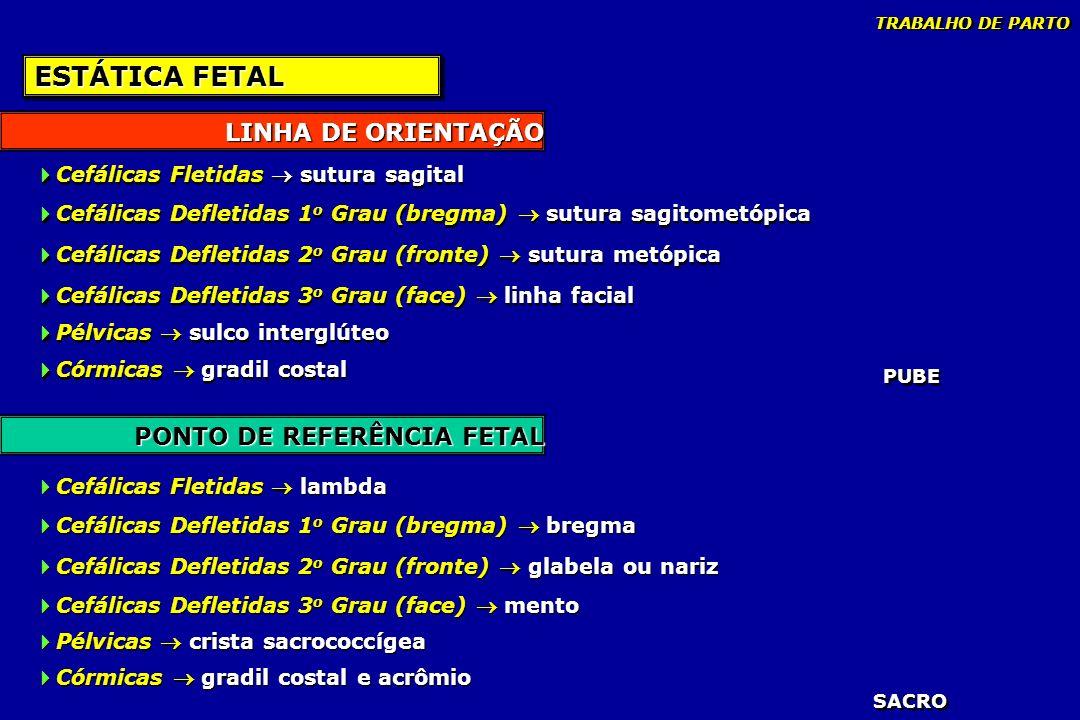 ESTÁTICA FETAL LINHA DE ORIENTAÇÃO PONTO DE REFERÊNCIA FETAL