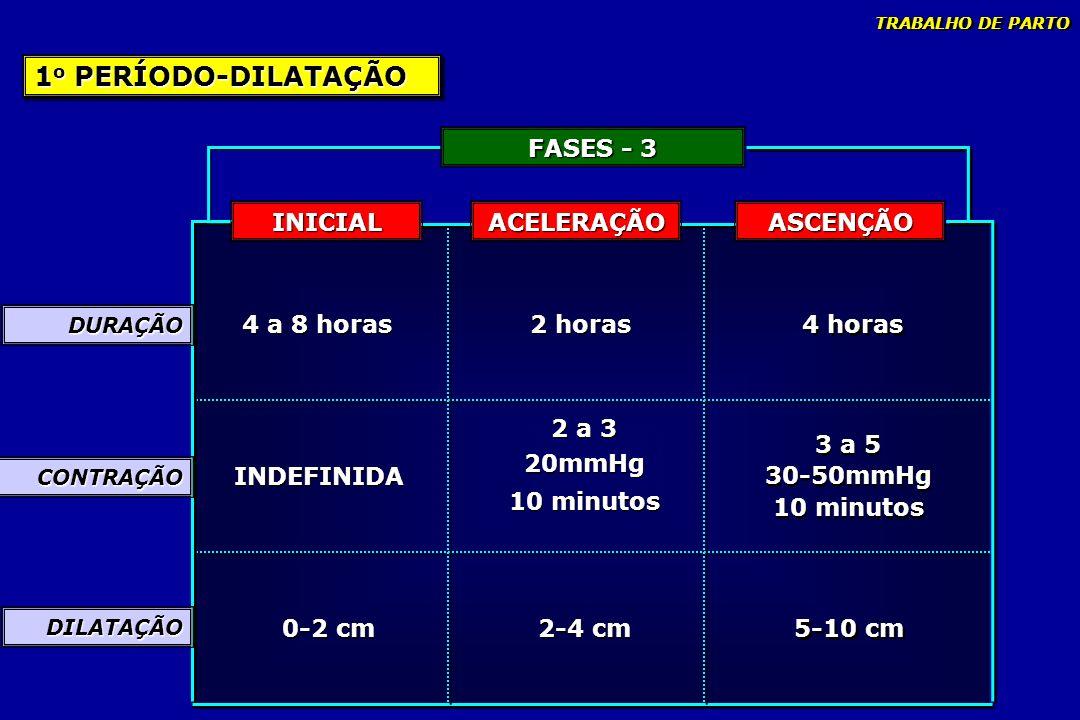 1o PERÍODO-DILATAÇÃO FASES - 3 INICIAL ACELERAÇÃO ASCENÇÃO 4 a 8 horas