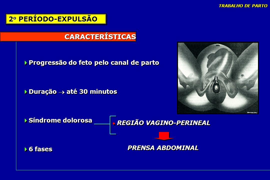 2o PERÍODO-EXPULSÃO CARACTERÍSTICAS