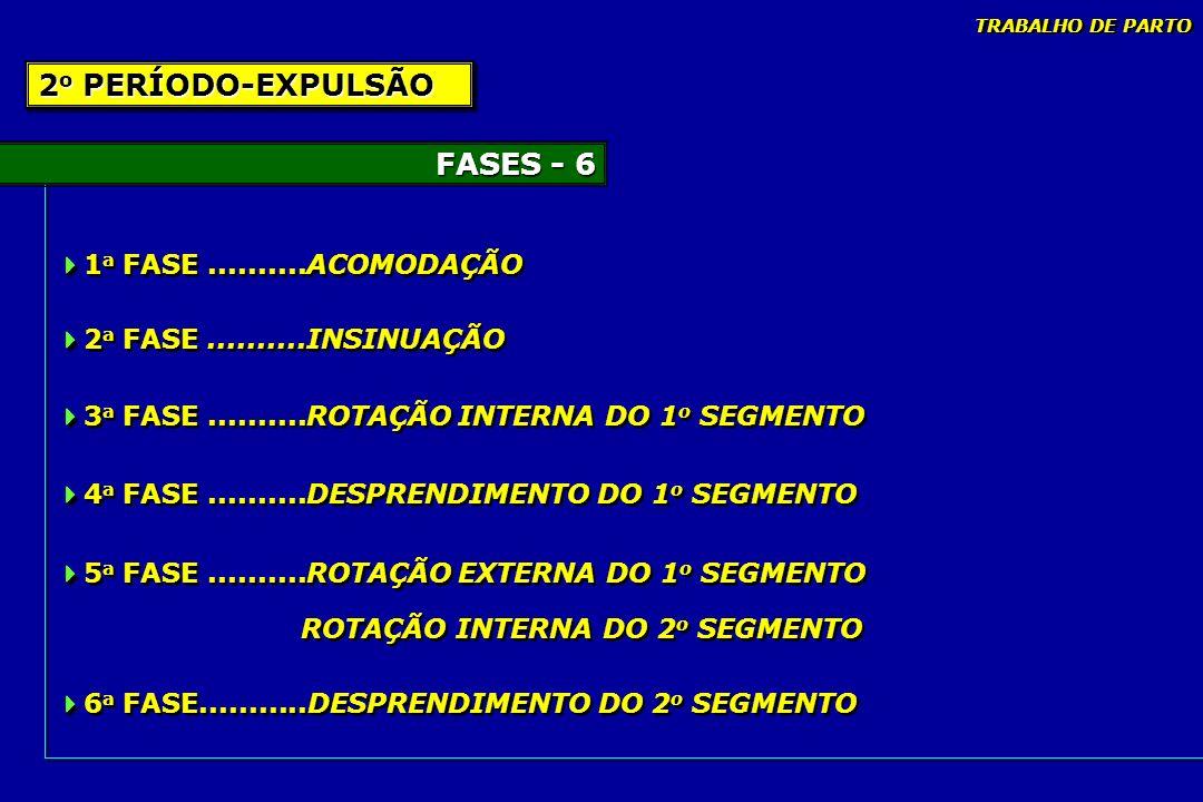2o PERÍODO-EXPULSÃO FASES - 6 1a FASE ..........ACOMODAÇÃO
