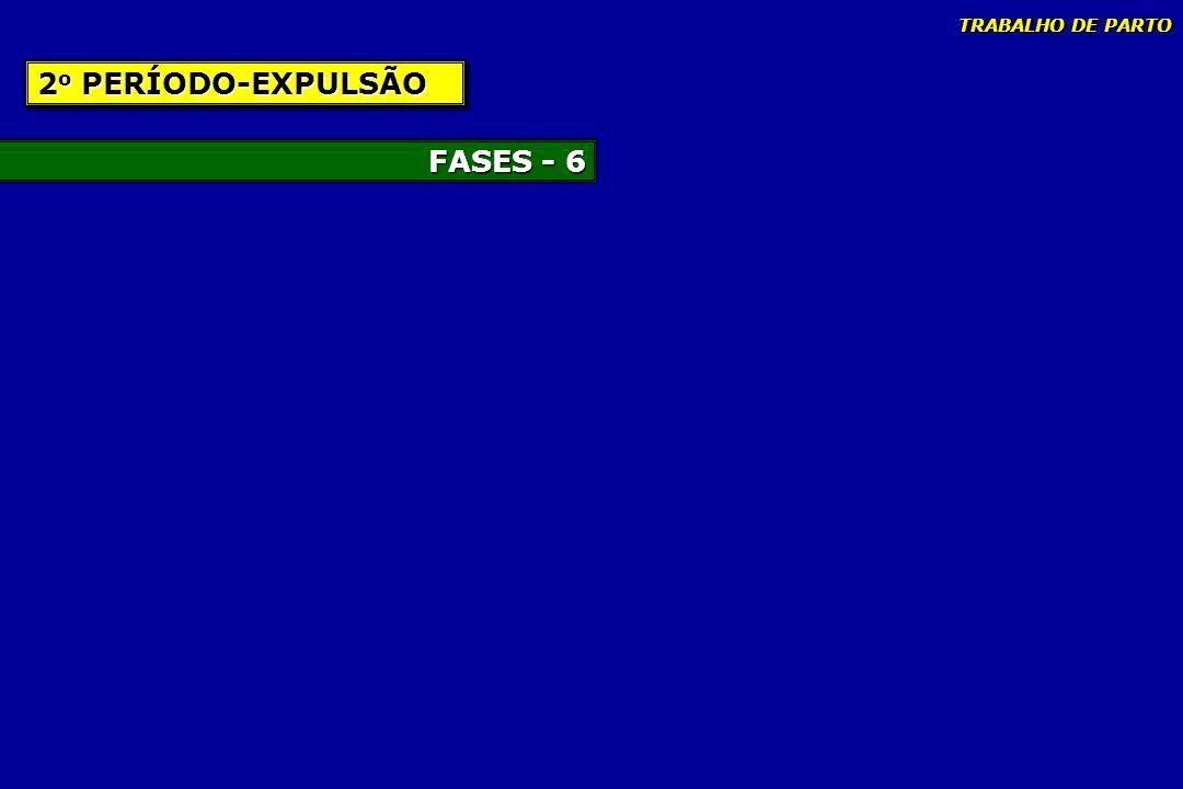 TRABALHO DE PARTO 2o PERÍODO-EXPULSÃO FASES - 6