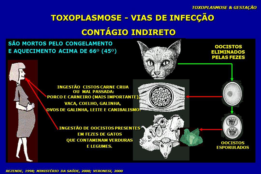 TOXOPLASMOSE - VIAS DE INFECÇÃO CONTÁGIO INDIRETO