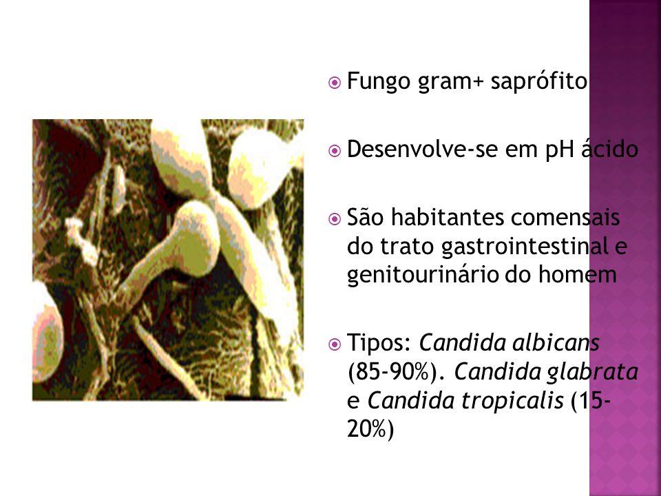 Fungo gram+ saprófitoDesenvolve-se em pH ácido. São habitantes comensais do trato gastrointestinal e genitourinário do homem.