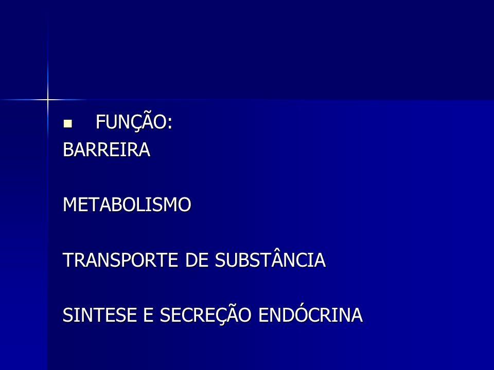 FUNÇÃO: BARREIRA METABOLISMO TRANSPORTE DE SUBSTÂNCIA SINTESE E SECREÇÃO ENDÓCRINA