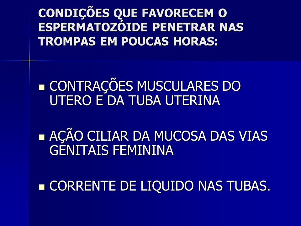 CONTRAÇÕES MUSCULARES DO UTERO E DA TUBA UTERINA