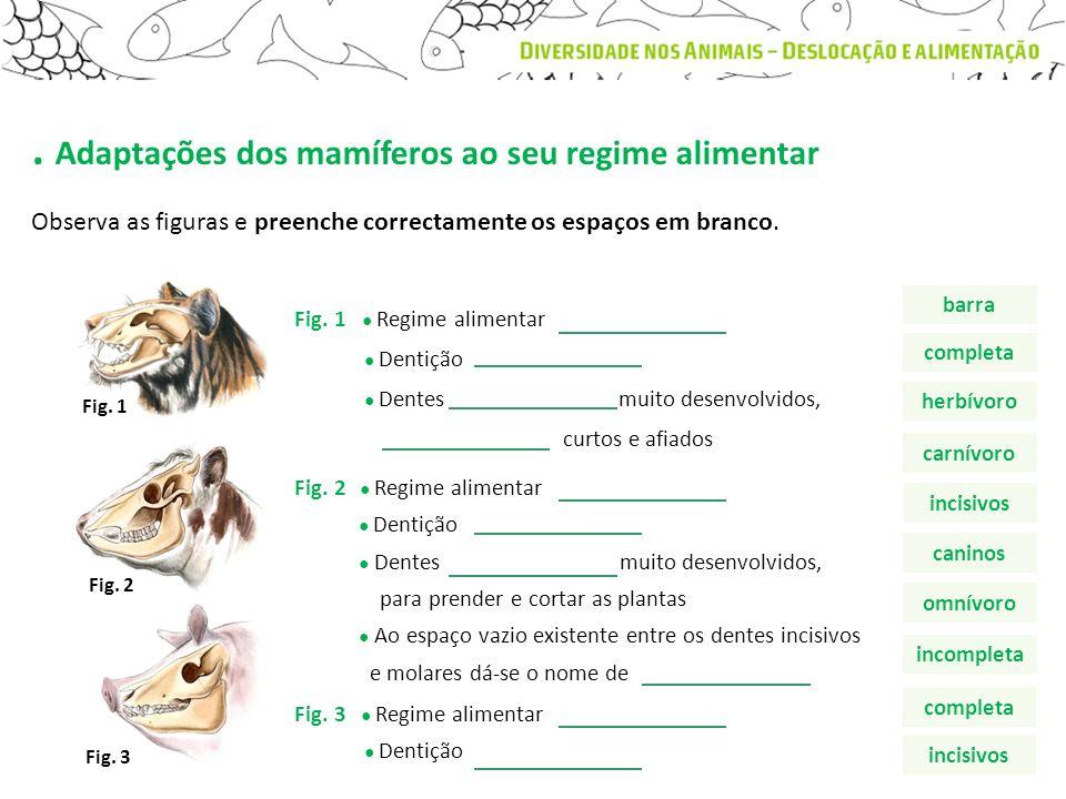 . Adaptações dos mamíferos ao seu regime alimentar