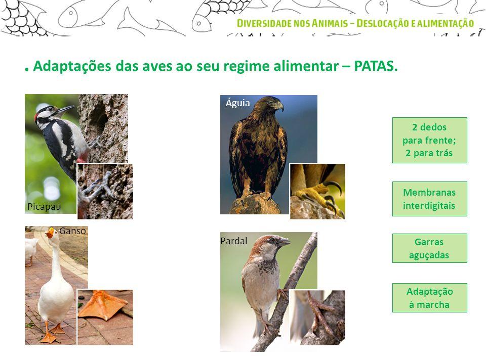 . Adaptações das aves ao seu regime alimentar – PATAS.