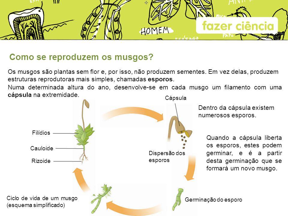 Como se reproduzem os musgos