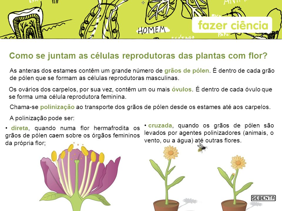 Como se juntam as células reprodutoras das plantas com flor