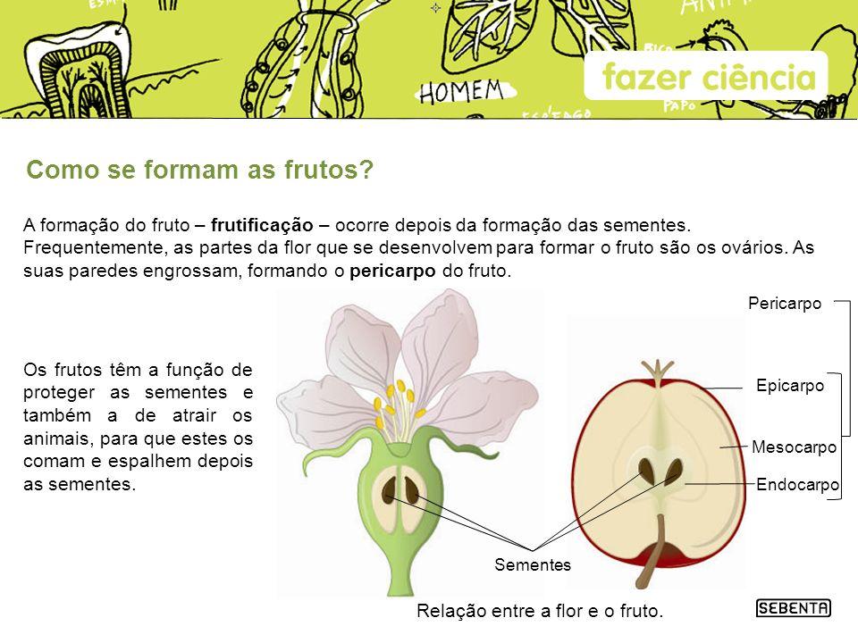 Relação entre a flor e o fruto.
