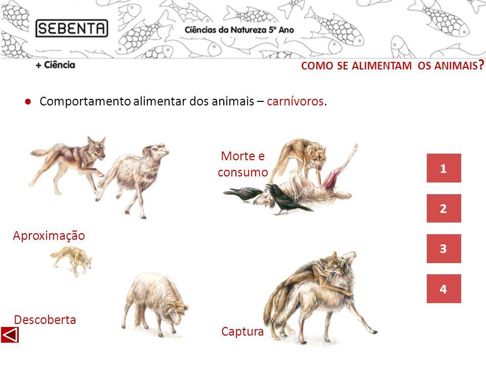 como se alimentam os animais