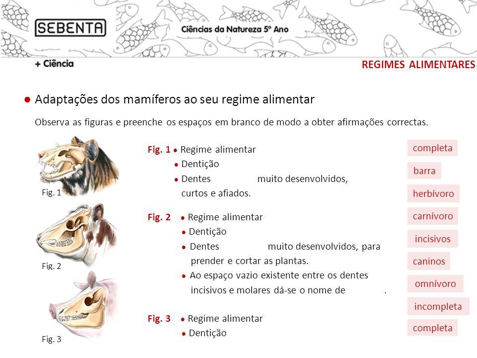 regimes alimentares ● Adaptações dos mamíferos ao seu regime alimentar