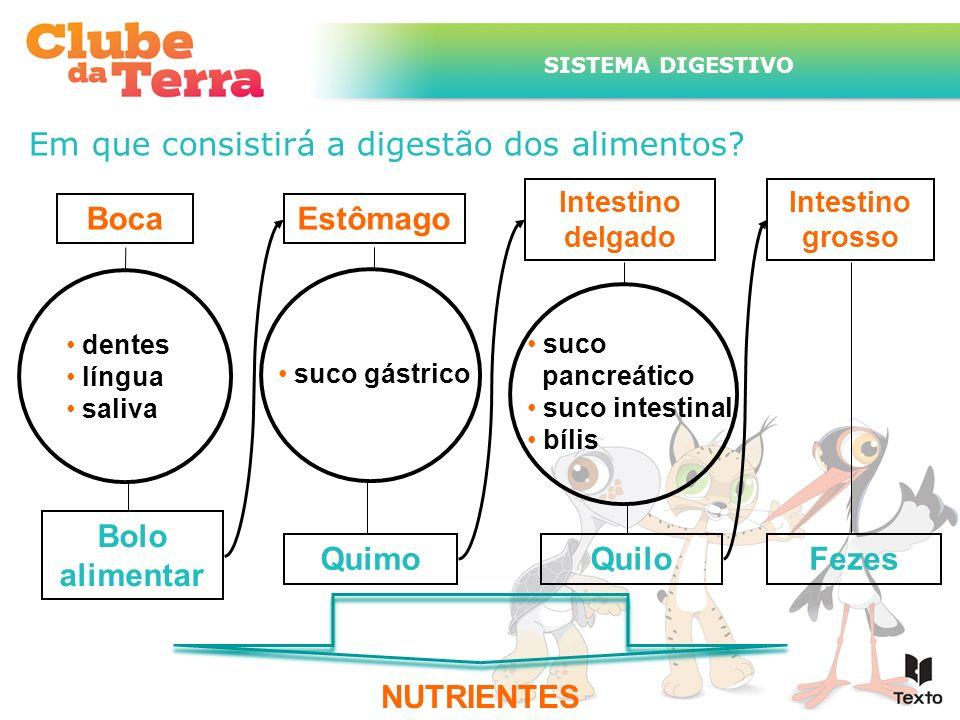 Boca Estômago Fezes Bolo alimentar Quimo Quilo NUTRIENTES
