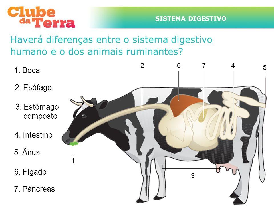 Haverá diferenças entre o sistema digestivo