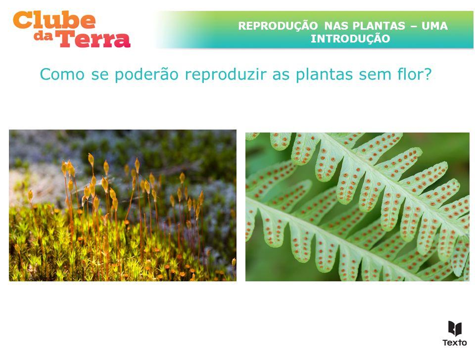 REPRODUÇÃO NAS PLANTAS – UMA INTRODUÇÃO