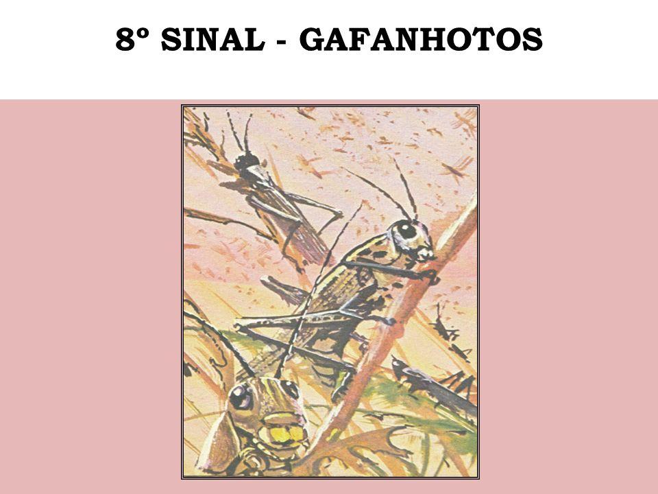 8º SINAL - GAFANHOTOS