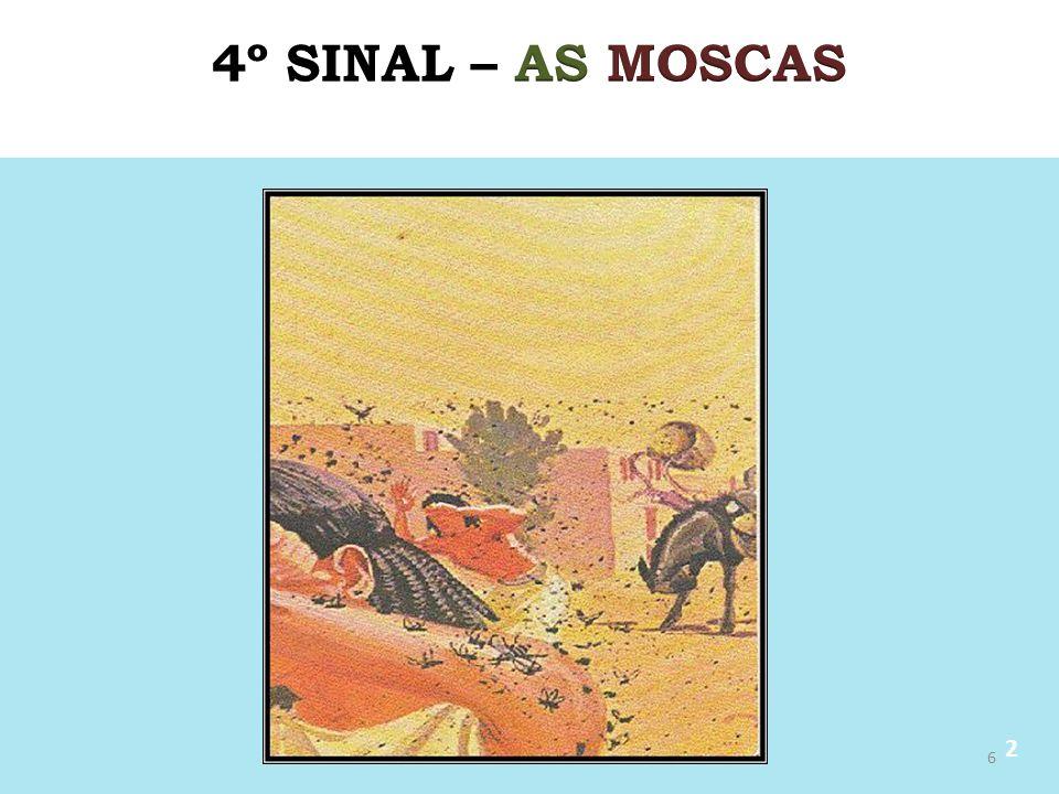 4º SINAL – AS MOSCAS 2