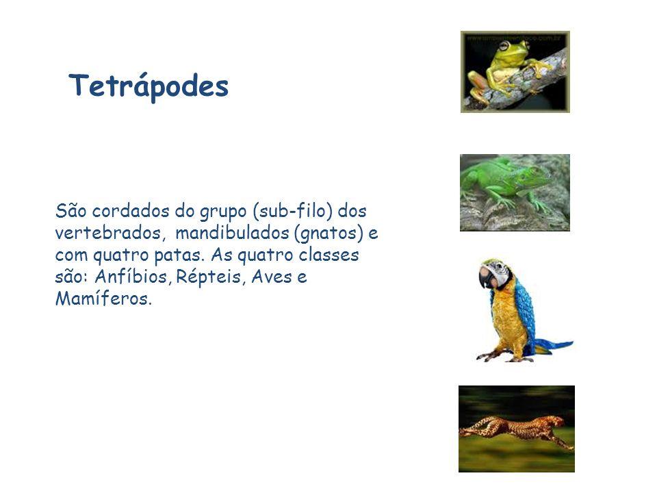 Tetrápodes