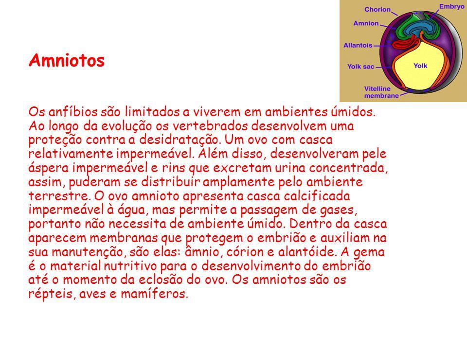 Amniotos