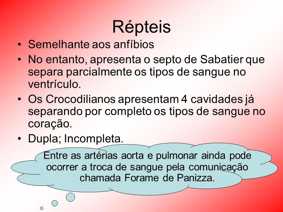 Répteis Semelhante aos anfíbios. No entanto, apresenta o septo de Sabatier que separa parcialmente os tipos de sangue no ventrículo.