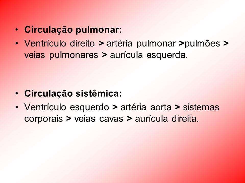 Circulação pulmonar:Ventrículo direito > artéria pulmonar >pulmões > veias pulmonares > aurícula esquerda.