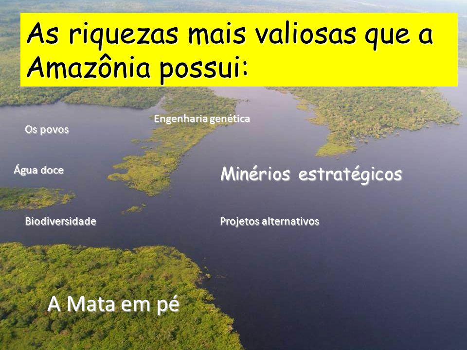 As riquezas mais valiosas que a Amazônia possui: