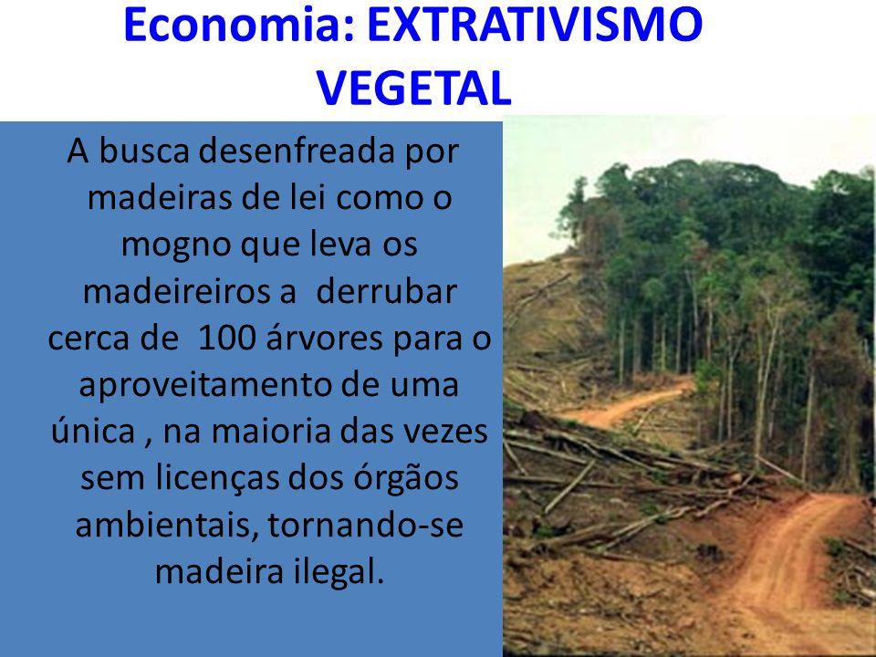 Economia: EXTRATIVISMO VEGETAL
