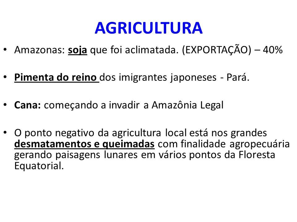 AGRICULTURA Amazonas: soja que foi aclimatada. (EXPORTAÇÃO) – 40%