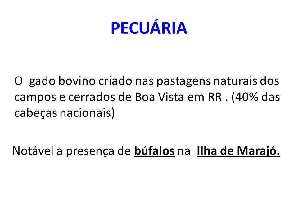 PECUÁRIA O gado bovino criado nas pastagens naturais dos campos e cerrados de Boa Vista em RR . (40% das cabeças nacionais)