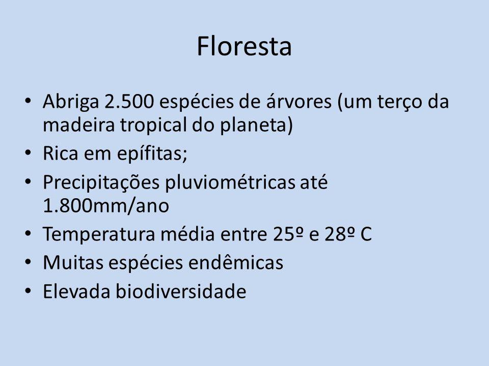 Floresta Abriga 2.500 espécies de árvores (um terço da madeira tropical do planeta) Rica em epífitas;