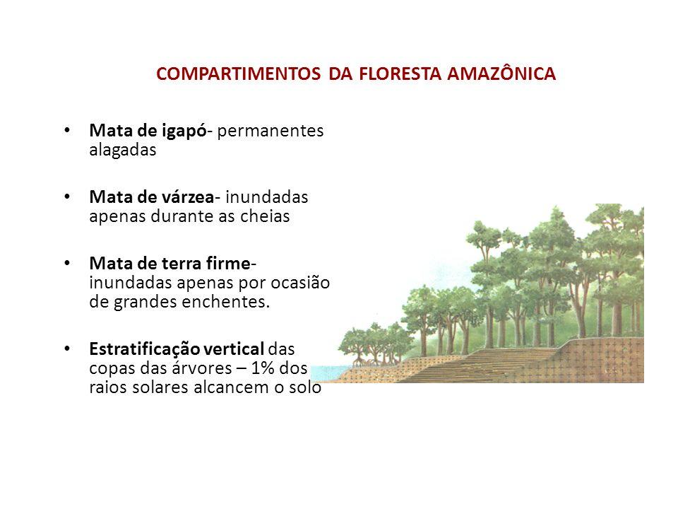 COMPARTIMENTOS DA FLORESTA AMAZÔNICA