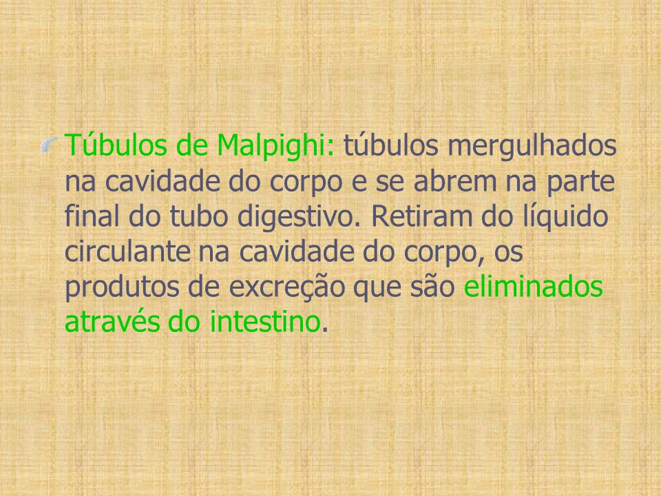 Túbulos de Malpighi: túbulos mergulhados na cavidade do corpo e se abrem na parte final do tubo digestivo.