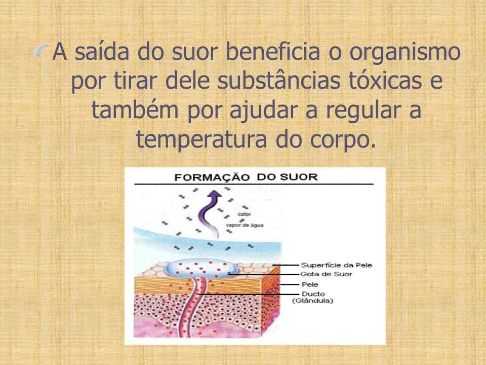 A saída do suor beneficia o organismo por tirar dele substâncias tóxicas e também por ajudar a regular a temperatura do corpo.