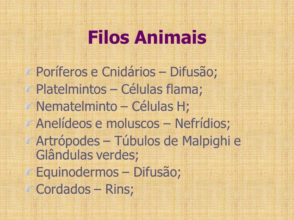 Filos Animais Poríferos e Cnidários – Difusão;