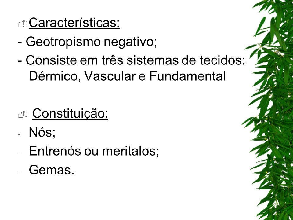 Características: - Geotropismo negativo; - Consiste em três sistemas de tecidos: Dérmico, Vascular e Fundamental.