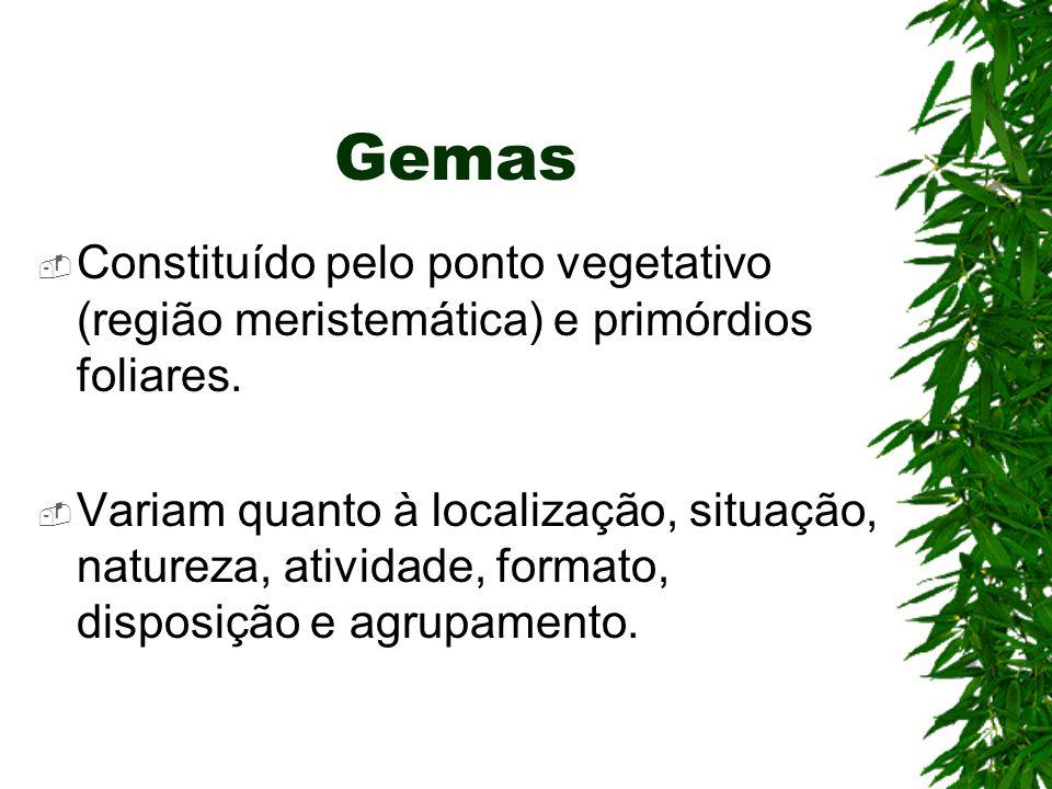 Gemas Constituído pelo ponto vegetativo (região meristemática) e primórdios foliares.
