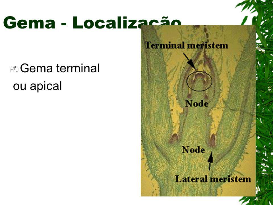 Gema - Localização Gema terminal ou apical