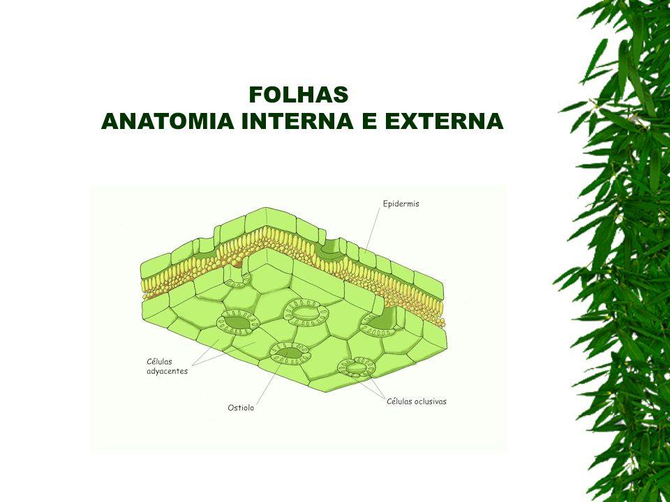 ANATOMIA INTERNA E EXTERNA