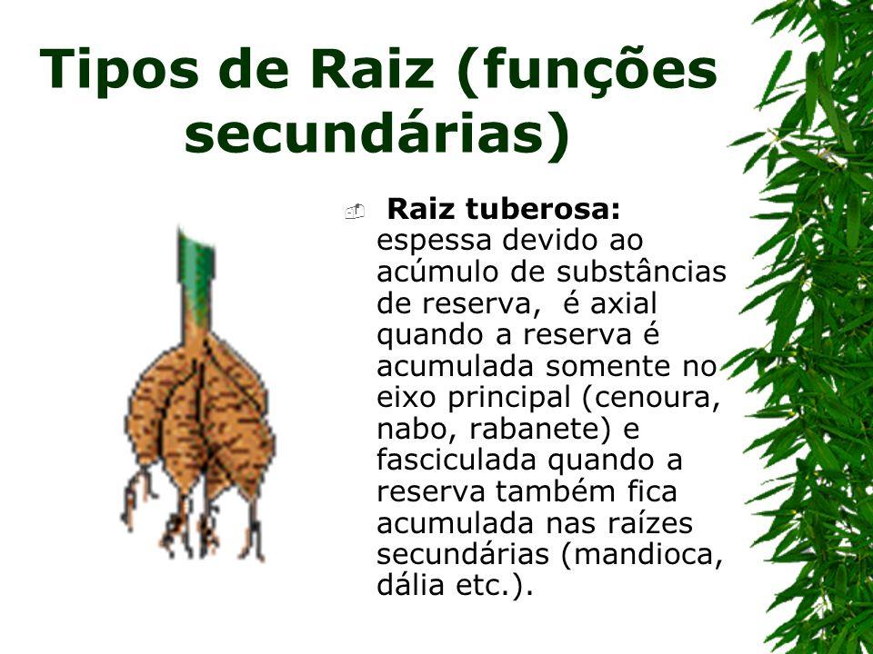 Tipos de Raiz (funções secundárias)